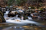 20071117_Bass_Creek_02.jpg